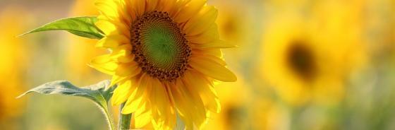 Der Tag der Sommerblume - 30. Juni