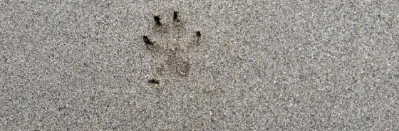 Wenn ein Hund stirbt